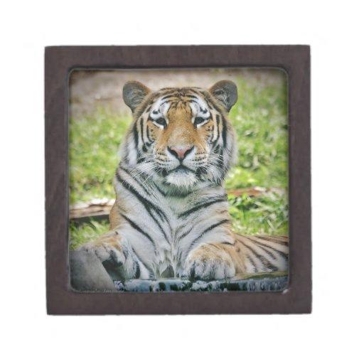 tigre cajas de regalo de calidad