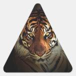 Tigre Calcomanías De Trianguloes Personalizadas