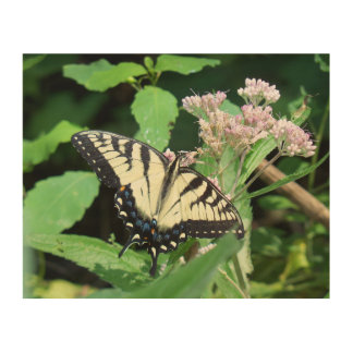 Tigre canadiense Swallowtail Cuadros De Madera