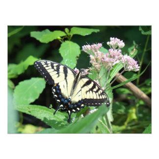 Tigre canadiense Swallowtail Fotografía