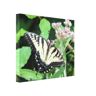 Tigre canadiense Swallowtail Impresión En Lienzo