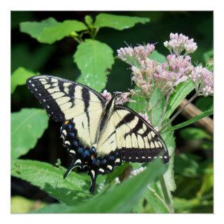 Tigre canadiense Swallowtail Perfect Poster