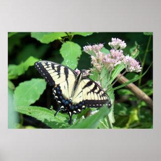 Tigre canadiense Swallowtail Póster