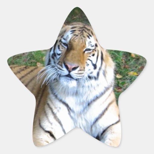 Tigre Colcomania Cuadrada
