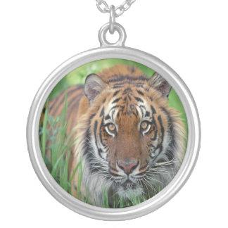 Tigre Joyería