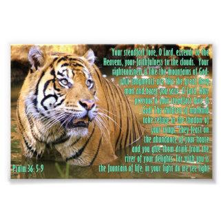 Tigre con el 36 5 del salmo - 9 arte fotografico