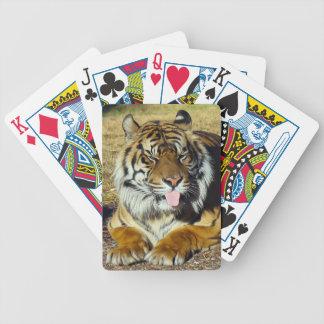 Tigre con los naipes de un tude del ` baraja cartas de poker