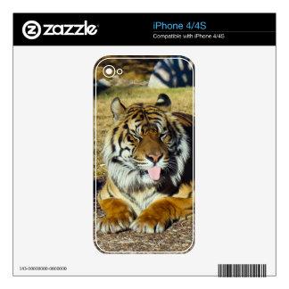 Tigre con una piel del iPhone 4/4s del tude del ` iPhone 4S Skins