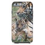 Tigre Cub
