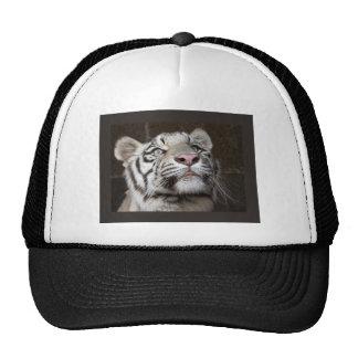 Tigre Cub blanco Gorras