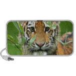 Tigre Cub de Amur Laptop Altavoz