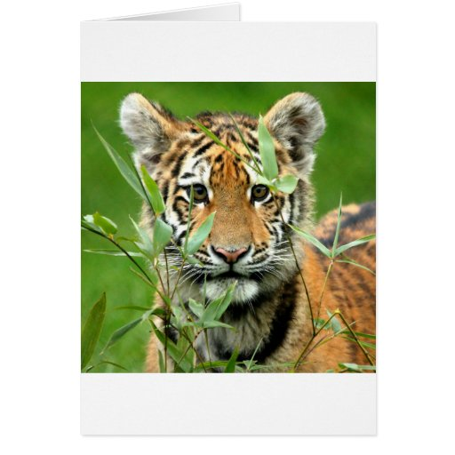 Tigre Cub de Amur Tarjetón