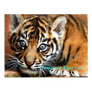 Tigre Cub de Sumatran Tarjeta Postal