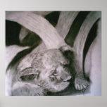 Tigre Cub el dormir Posters