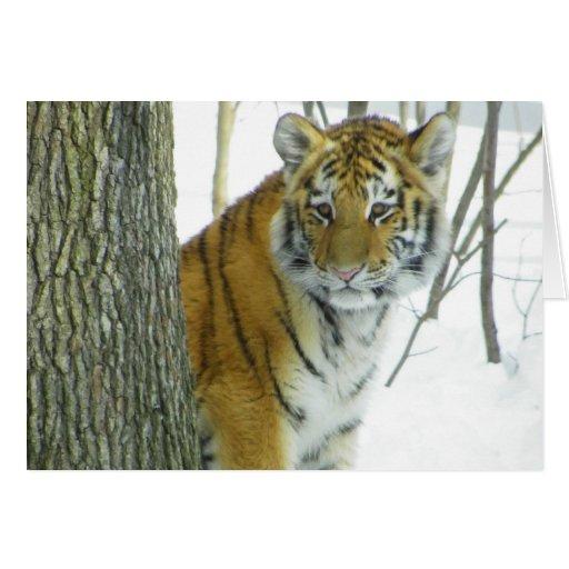 Tigre Cub en la nieve que mira a escondidas alrede Felicitaciones