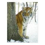 Tigre Cub en la nieve que mira a escondidas alrede Tarjeta Postal