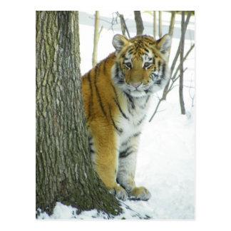 Tigre Cub en la nieve que mira a escondidas Tarjetas Postales