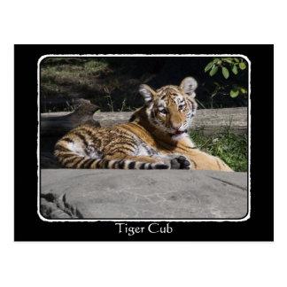 Tigre Cub en las rocas con la frontera Tarjeta Postal