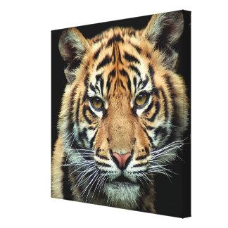 Tigre Cub en peligro Lona Estirada Galerias