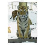 Tigre Cub en retrato de la nieve Felicitaciones
