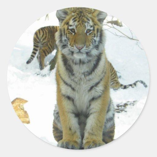 Tigre Cub en retrato de la nieve Pegatina Redonda