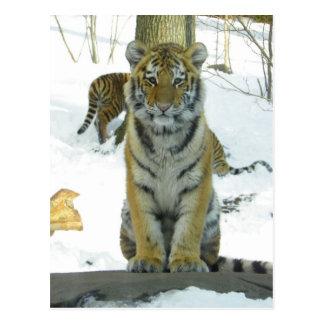 Tigre Cub en retrato de la nieve Postales