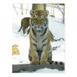 Tigre Cub en retrato de la nieve Tarjetas Postales