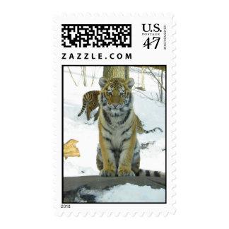 Tigre Cub en retrato de la nieve Timbre Postal