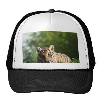 Tigre Cub Gorras