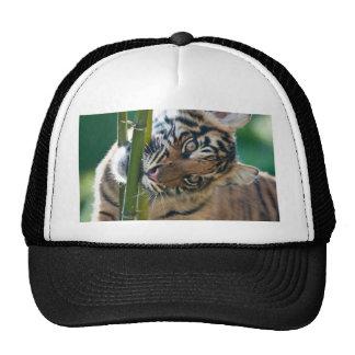 Tigre Cub Gorro