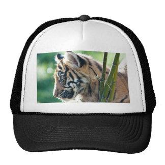 Tigre Cub Gorros