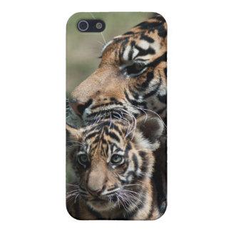 Tigre Cub iPhone 5 Carcasa