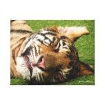 Tigre Cub Lona Envuelta Para Galerias