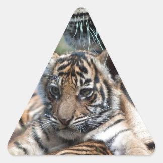 Tigre Cub Pegatinas De Triangulo