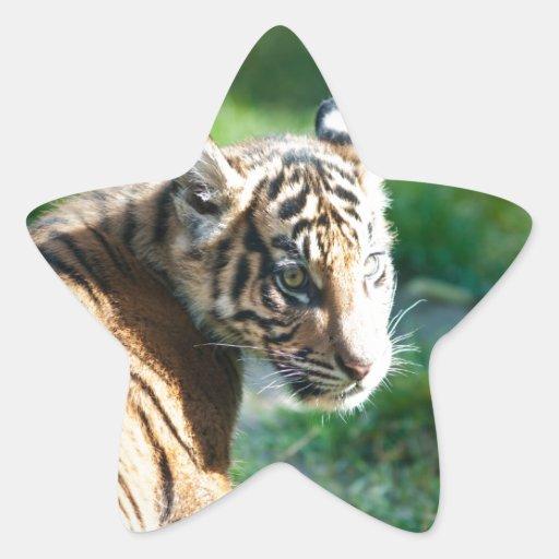 Tigre Cub Pegatina En Forma De Estrella