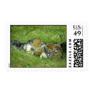 Tigre Cub que juega con un palillo Timbres Postales