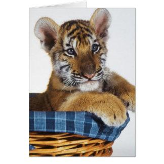 Tigre Cub siberiano en cesta Tarjeta De Felicitación