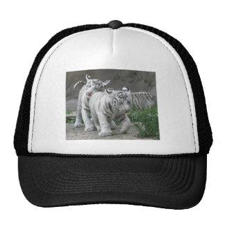 Tigre Cubs de Bengala Gorras De Camionero