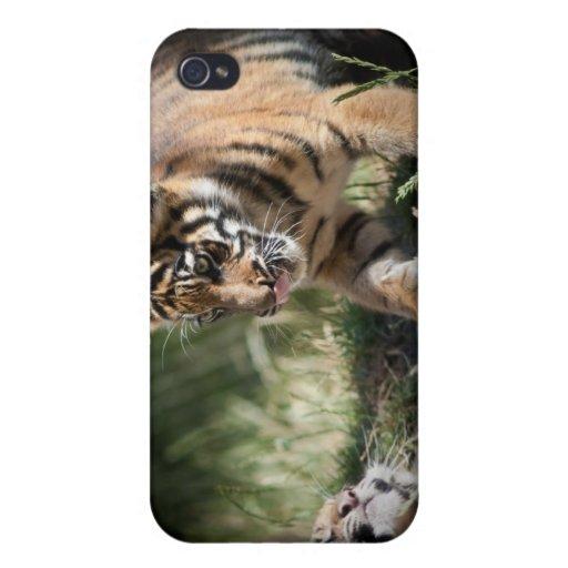 Tigre Cubs iPhone 4 Cobertura