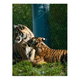 Tigre Cubs Tarjeta Postal