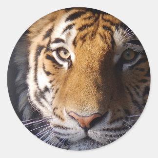 Tigre de Amur Pegatina Redonda