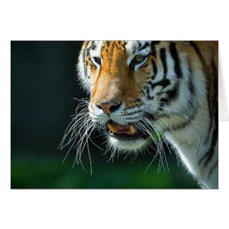 Tigre de Amur Tarjeta De Felicitación