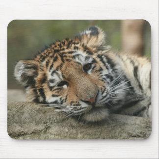 Tigre de bebé el dormir mouse pads