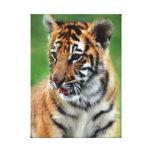 Tigre de bebé en color impresión en lienzo estirada