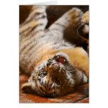 Tigre de bebé lindo que rueda alrededor en el suyo felicitacion