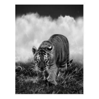 Tigre de bebé que acecha en blanco y negro postal