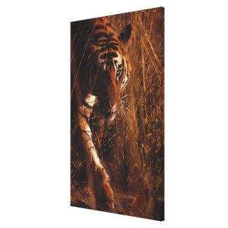 Tigre de Bengala 4 Lienzo Envuelto Para Galerias
