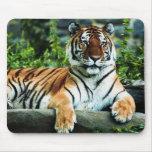 tigre de Bengala Alfombrilla De Ratón