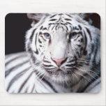 Tigre de Bengala blanco Mousepad Tapete De Ratón