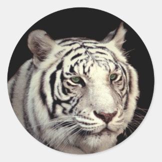 Tigre de Bengala blanco Etiqueta Redonda